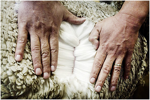 Меринос свойства шерсти высококачественные ткани